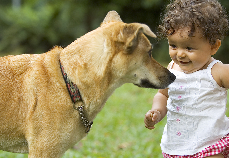 May 15-22, 2016 is Dog Bite Prevention Week®. Each year, more than 4.5 million people in the US are bitten by dogs. Of the 800,000 who seek medication attention, half […]